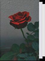 LoveMidnightMoon's Reading List