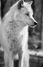 Белая волчица. by BlackRabbit3376