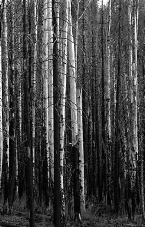 The Whitewood Forest by HelenaChainz