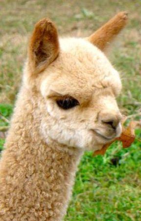 The magic llama by Abbireillyismyname