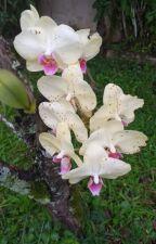Brasileirinha by SandraRummer