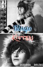 Ringo the Kitten by Rebecca_Dolenz