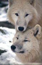 I Heard Your Voice and Fell In Love (werewolf/human) by TiffaniBowman