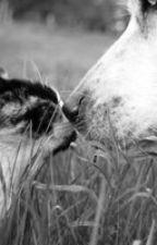 Being a Cat Shifter by jojo_5683