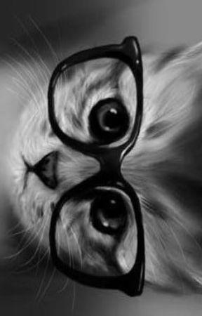 Gatos by GalletitaDeLaSuerte