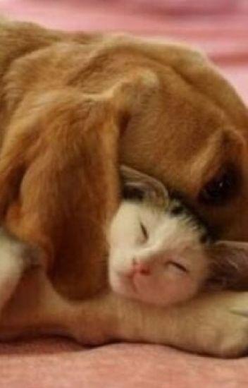 Amizade entre o Cão e o Gato 🐶🐱