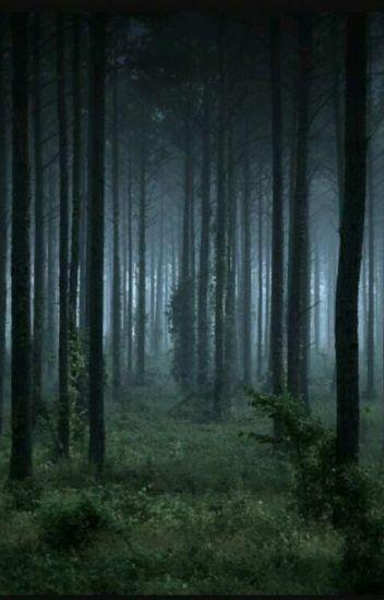 Dark Woods Cat Wattpad