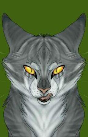 THE CAT  by AllTheKitties