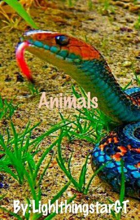 Animals by LighlthingstarGT