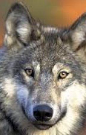 it s a pretty wolf it s a pretty wolf wattpad