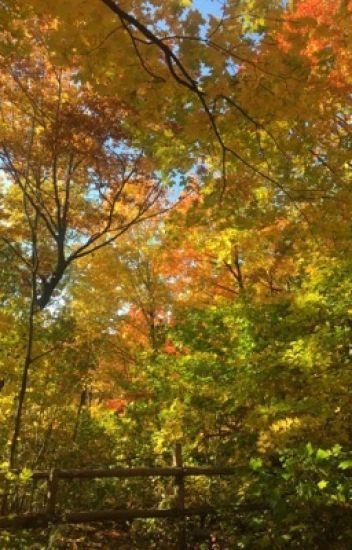 Diary of An Aspergirl