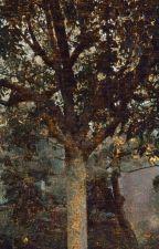 Sweet Bay Tree by Darth_Veedy
