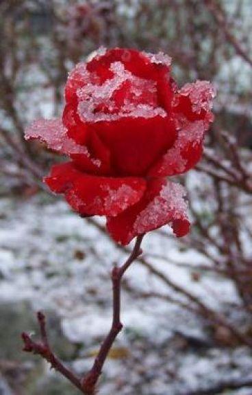 Frozen -poem