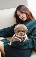 Park Jiyeon Fake Instagram by pjyblack