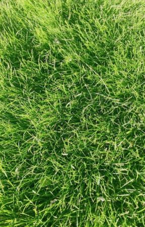 Grow Grass by CynthiaBrian