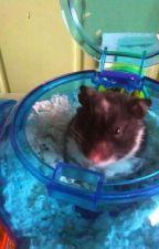 My Past Hamsters by Fanguru98
