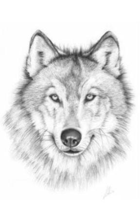 The lost wolf by charlottzab1