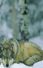 Das Leben eines Wolfes by ItzWolfi