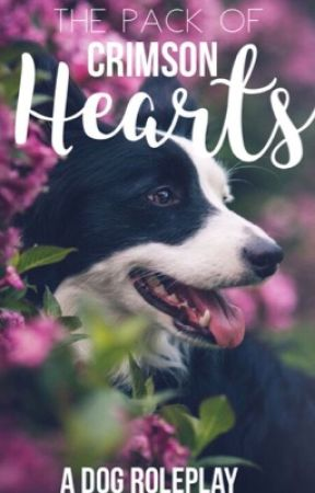 The Pack of Crimson Hearts | A Dog Roleplay by bailsoffrails