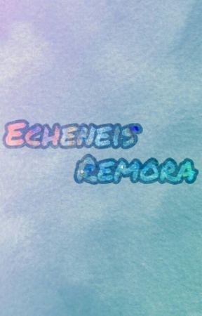 Echeneis Remora by Mi_imnida