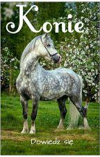 Konie - dowiedz się by MagnusTailbone