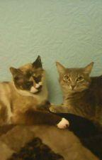 Мои кошки-Варя и Моника. by kkllaasszz8225dg