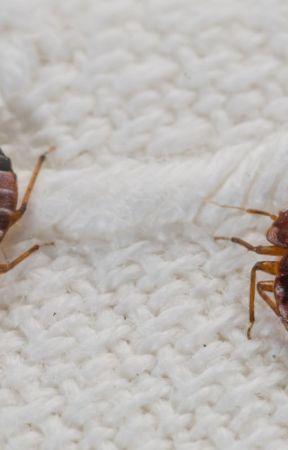 Bed Bug Detector by Getridofbedbugs