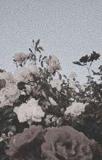 [Đoản] (TaeKookMin) Cục bông nhà họ Park :3 by citrinepal