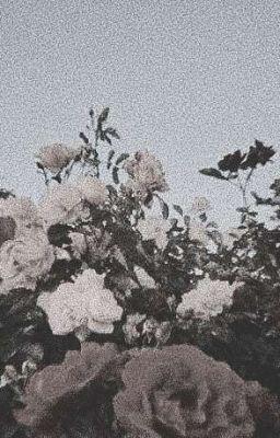 [Đoản] (VKookMin) Cục bông nhà họ Park :3