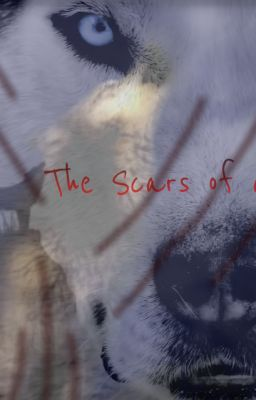The Scars of a Wolf