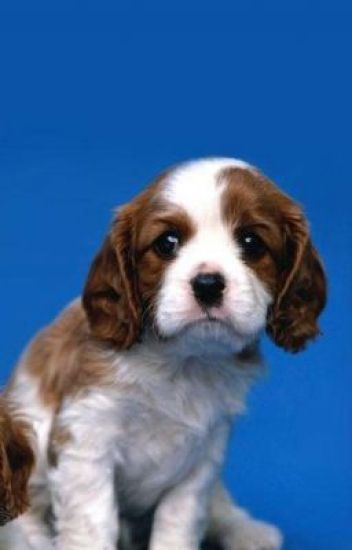 brownie the dog