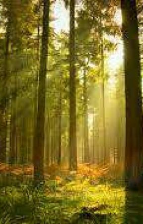 The forest by EnzioJoshuaRodriguez