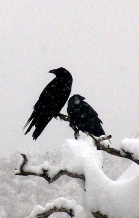 Crows In Winter by OllinBautista