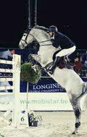 Honey Amber Riding Academy  (HARA) Book 1 by Equestrian-Kpop