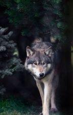 Teen wolf la historia de una mujer-lobo by america_pigeon