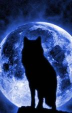 Midnight- Der Ruf des Wolfs by SilverMoon0005