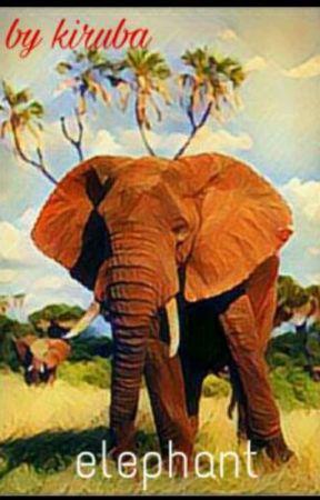 elephant by xxkirubaxx