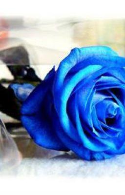Đọc truyện [ ngư-yết, xử kết,dương ngưu,sư-giải] bông hoa hồng xanh