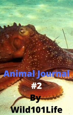 Animal Journal #2 by Wild101Life by Wild101Life