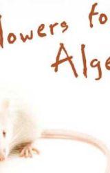 Flowers for Algernon poem  by huskiesforever101