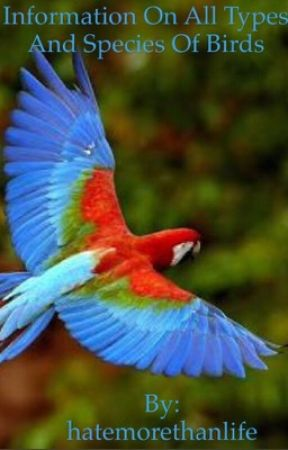 Information On All Types And Species Of Birds Amazon