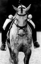 The Horse that Flew by hollyann007