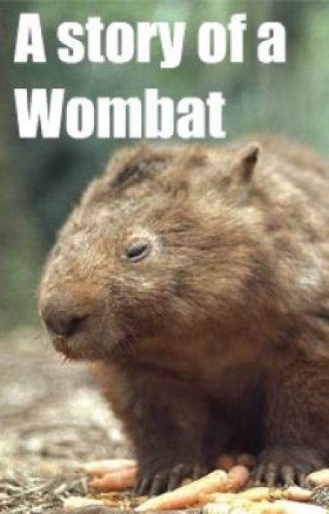 The story of a wombat