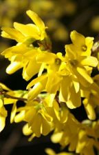 In the Land of Flower: Forsythia by ZefaAgatha9