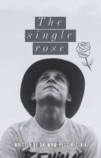 The Single Rose☑️ by dhlwnw-pessimistria