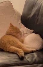 (EN CORRECTION) Un amour dangereux (EN CORRECTION) by Lune-sDarkness