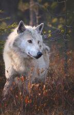 Werewolf & The Sorcerrer by Skyyy284