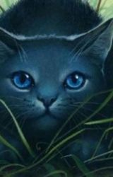 Warrior Cats Rp by WarriorCatRoleplay