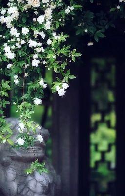 Đọc truyện Pinyin Cổ Phong