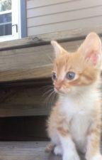 Mah Kitten by MatchstickShadow